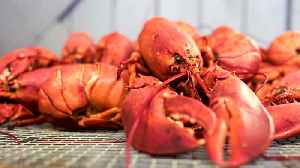 Why Maine Is Lobster, and Lobster Is Maine [Video]