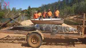 After an Almost Decade-long Search, Park Rangers In Australia Capture a Massive Crocodile [Video]