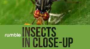 Mesmerizing Close-Up Compilation Of Various Insects In Ecuador [Video]