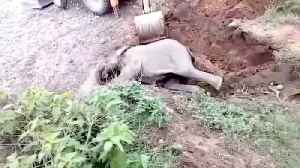 Heartwarming moment Indianforest officials rescue elephant calf from ditch [Video]