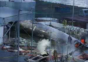 News video: Endangered Blue Whale Illegally Slaughtered by Icelandic Whalers, Claim Activists