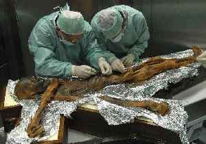 Last meal of 'iceman' who died 5,300 years ago revealed [Video]