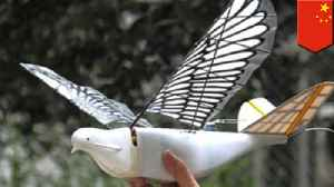 China to increase surveillance by using robotic doves [Video]