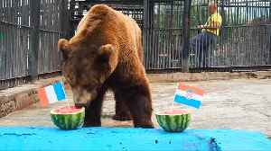 Siberian bear picks Croatia to win World Cup final [Video]