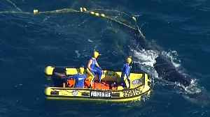 Rescuers free tangled humpback whale [Video]