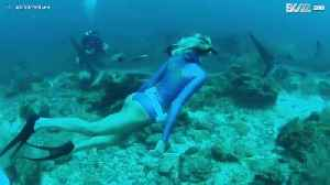 Woman swims with sharks in the waters of Roatan [Video]
