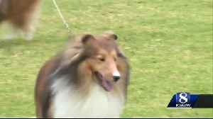 Del Monte Kennel Club dog show takes place in Carmel Valley [Video]