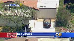 Cleaning Lady, Firefighters Hurt In Bee Attack [Video]