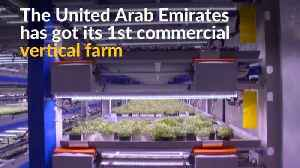 Could the UAE's first vertical farm stem food imports? [Video]