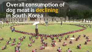 Adopt dogs instead of eating them, South Koreans told [Video]