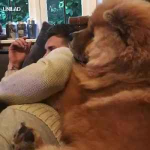 The Lovely Dog Cuddles With  Guy [Video]