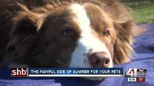 Hot dog! Vets say burned feet common for dogs in the summer [Video]