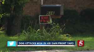 Man Attacked by Dog In His Own Front Yard [Video]
