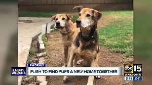 Dogs looking for forever home after nearly 10-years of living in shelters and foster homes [Video]