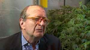 Reagan lawyer grows marijuana [Video]
