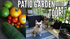 GARDEN TOUR 2018 | July Small Space Patio Garden Tour - Growing in Containers!! [Video]