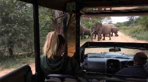 Huge herd of Elephant crossing right in front of us amazing! [Video]