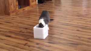 Cat Gets A Box Makeover [Video]