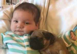 Cute Baby Shares Special Moment With His Pug Pal [Video]