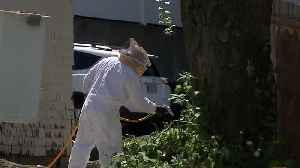 Worker in bucket stung hundreds of times in bee attack [Video]