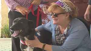 Stray dog from Iraq finds forever home in Palm Beach County [Video]