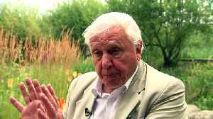 Sir David Attenborough urges people to join butterfly count [Video]