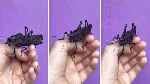 Is this the world's most royal grasshopper? Purple coloured insect wows the internet [Video]