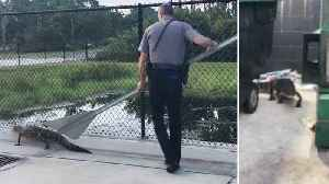 Florida Police Help Out Alligator With 'Yield' Sign [Video]