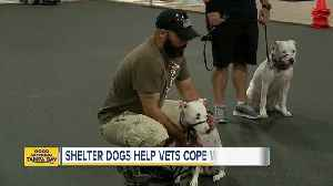 Shelters dogs helping veterans cope with PTSD [Video]