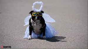 Britain's Most Pampered Pooch Has Had a Staggering £40,000 Spent On Her Over Her Short Lifetime [Video]
