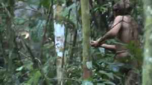 Fresh footage of uncontacted indigenous man in Amazon emerges [Video]