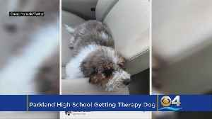 Marjory Stoneman Douglas High School To Get Official Therapy Dog [Video]