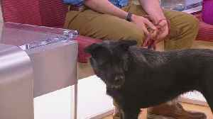 Meet Falicity, Our Pet Guest Of The Week [Video]