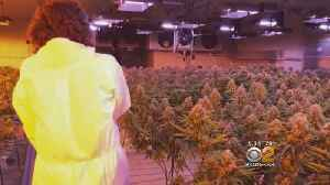 Exclusive: Inside NJ Warehouse Filled With Thousands Of Pot Plants [Video]