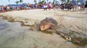 And They're Off! 'Coco' & 'Little Money' Released In Tour de Turtles [Video]