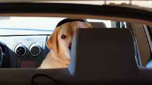 Dog Saved After Left Alone In Hot Car At Six Flags [Video]