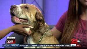 Meet our 23ABC Pet of the Week, Belle! [Video]