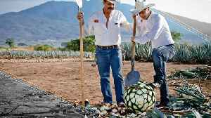 Tequila Takes Over The World [Video]