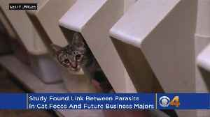 News video: CU Study: Parasite In Cat Poop May Make Humans More Business Savvy