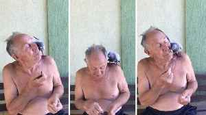 Pigeon eats from pensioner's mouth as unlikely duo show off their remarkable bond [Video]