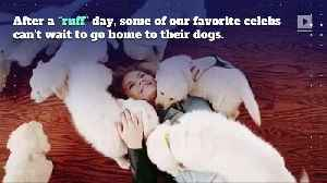 12 Celebrities With Puppy Love [Video]