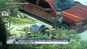 Shark stolen from San Antonio aquarium [Video]
