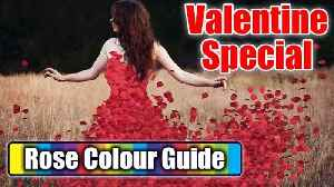 Valentine Week: Rose Day - Check out meaning of different Rose colours | BoldSky [Video]