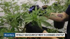The Wrigley Billionaire Moving From Chewing Gum to Pot [Video]