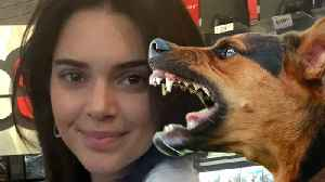Kendall Jenner's Dog Accused Of BITING Little Girl! [Video]