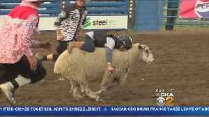 Boy, 5, Sets Mutton Busting Record [Video]