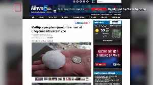 14 People Injured and 2 Zoo Animals Killed In Hailstorm At Cheyenne Mountain Zoo [Video]