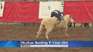 5 Year Old Crowned 'Mutton Busting' Champ [Video]