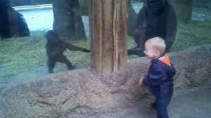 *AWW* Little Boy Plays Peek A Boo With A Baby Gorilla [Video]