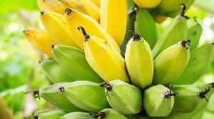 Bananas Are Taking Over Skin Care Products [Video]